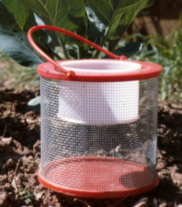 Many types of containers, like this cricket cage, are suitable for collecting and storing insects